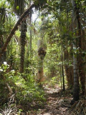 riparianrainforest