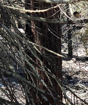 Lichen on trees (1)