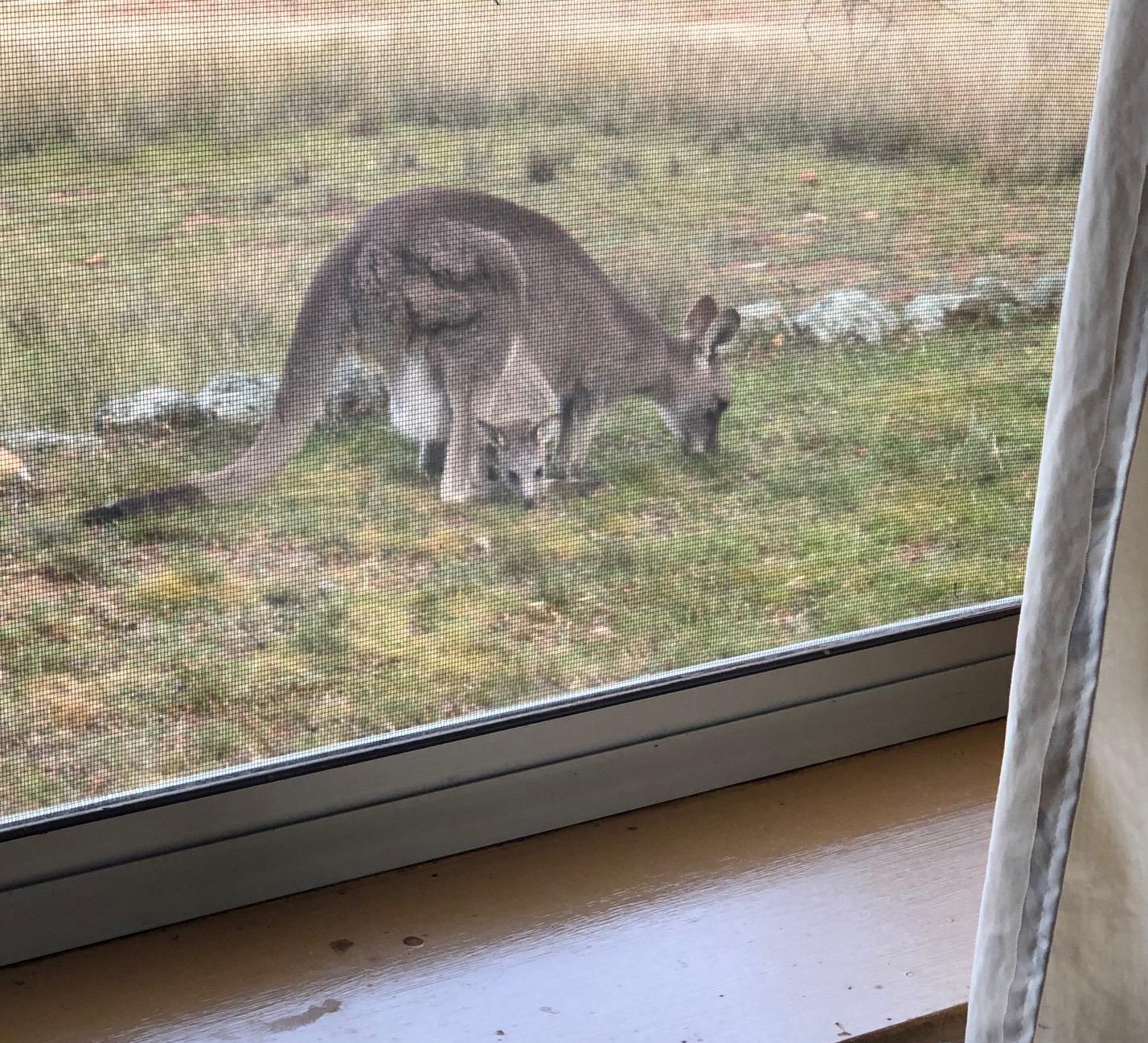Vistors outside my window