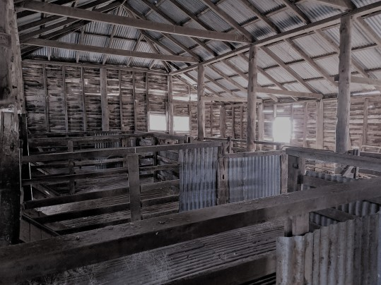 shearing shed .jpg